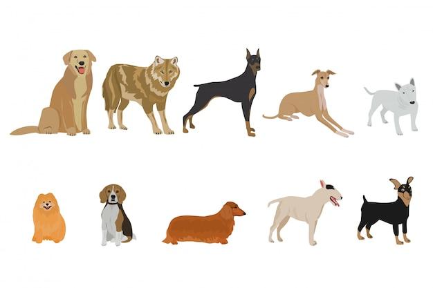 Ensemble de races de chiens sur fond blanc Vecteur Premium