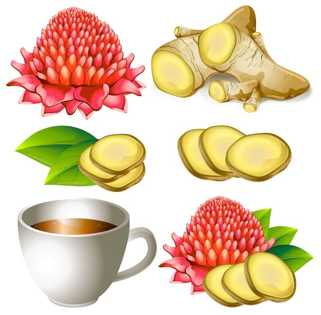 Ensemble de racine de gingembre avec une fleur et une tasse de thé Vecteur Premium