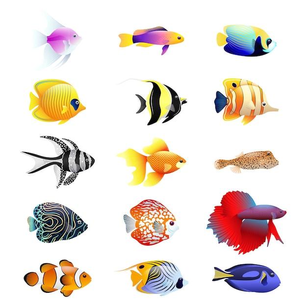 Ensemble Réaliste De Dessin Animé De Poissons Tropicaux. Ensemble Multicolore De Neuf Types Différents De Poissons De Récif Corallien Vecteur Premium