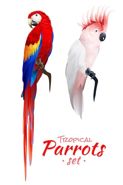 Ensemble réaliste de perroquets tropicaux Vecteur gratuit