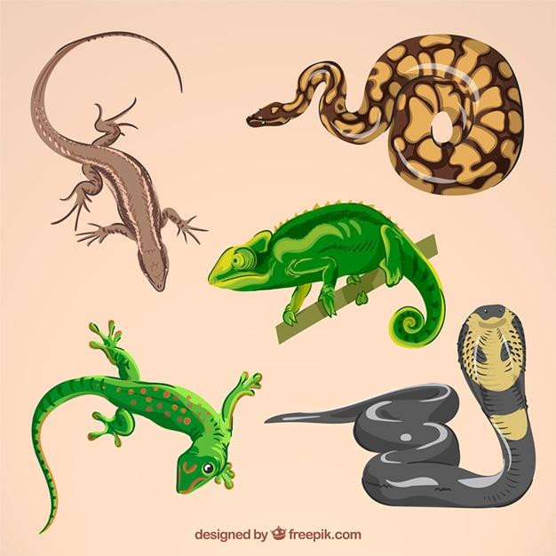 Ensemble de reptile dessiné à la main Vecteur gratuit