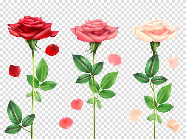 Ensemble de roses réalistes Vecteur gratuit