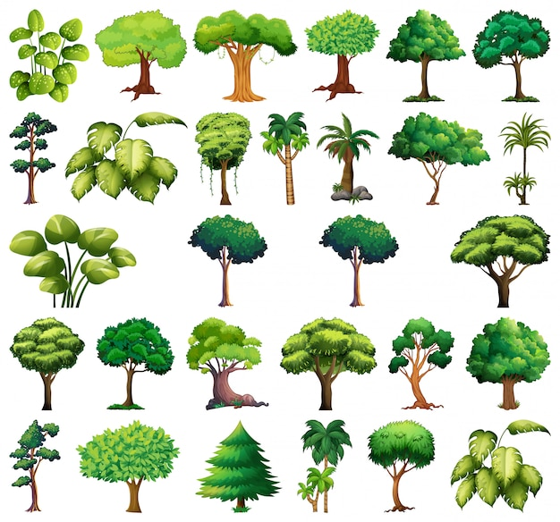 Ensemble De Variétés De Plantes Et D'arbres Vecteur gratuit