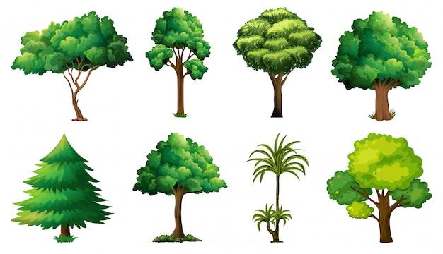 Ensemble De Variétés De Plantes Et D'arbres Vecteur Premium