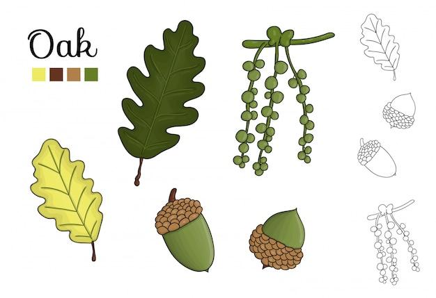 Ensemble de vecteur d'éléments de chêne isolé. illustration botanique de feuille de chêne, brunch, fleurs, glands, ament. clipart noir et blanc. Vecteur Premium