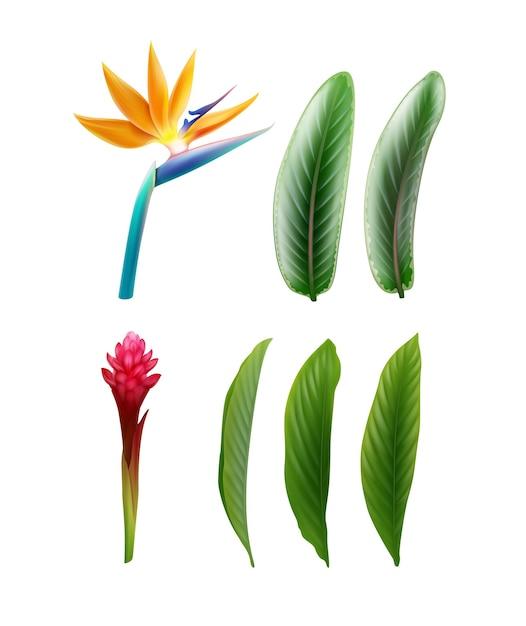 Ensemble De Vecteur De Plantes Tropicales Fleur D'oiseau De Paradis Ou Strelitzia Reginae Et Alpinia Purpurata Avec Des Feuilles Isolées Sur Fond Blanc Vecteur gratuit