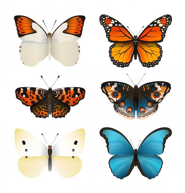 Ensemble De Vecteurs De Papillons. Papillon Plat Coloré. Dégradé De Couleur Réaliste. Vecteur Premium