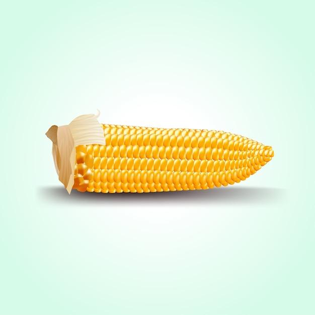 Épi de maïs mûr. Vecteur Premium