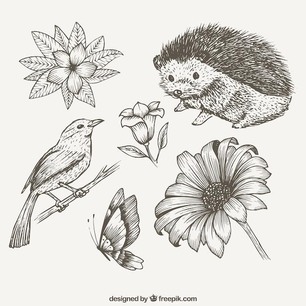 Esquisses animaux mignons et des fleurs Vecteur gratuit