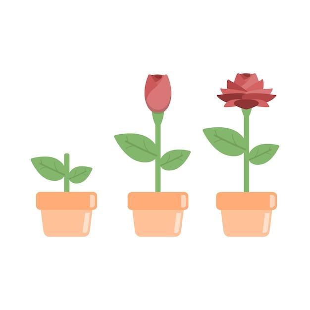 étapes De L Objet De Dessin Animé De Plantes De Croissance