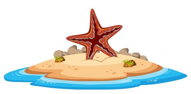 Étoile de mer isolée sur l'île Vecteur Premium
