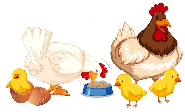 Une famille de poulet heureuse Vecteur Premium