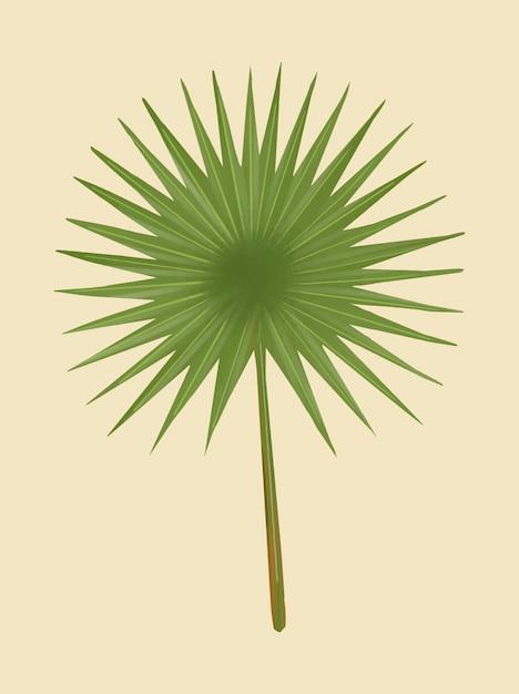 Feuille de palmier de fan vert tropical Vecteur gratuit