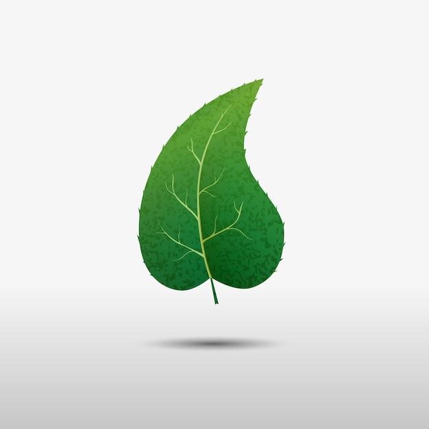 Feuille verte de l'arbre Vecteur Premium