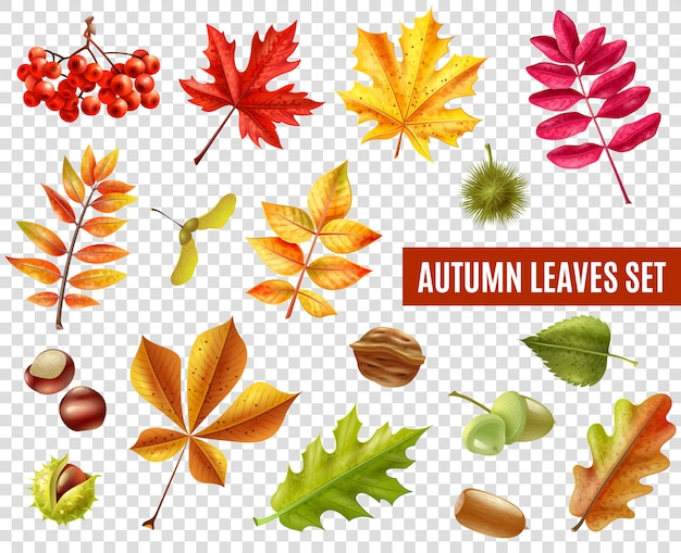 Feuilles d'automne ensemble transparent Vecteur gratuit