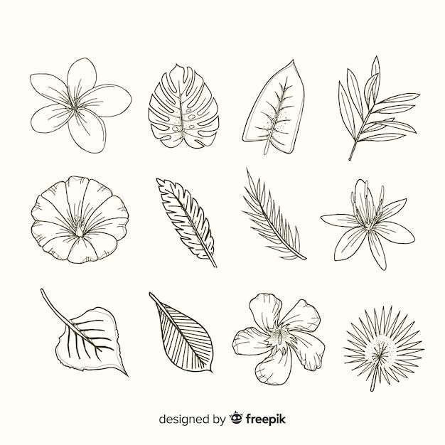 Feuilles et fleurs réalistes dessinées à la main Vecteur gratuit