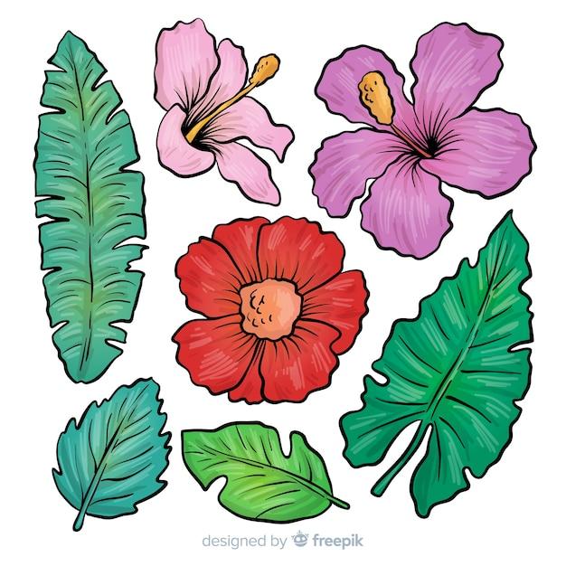Feuilles et fleurs tropicales dessinées à la main Vecteur gratuit