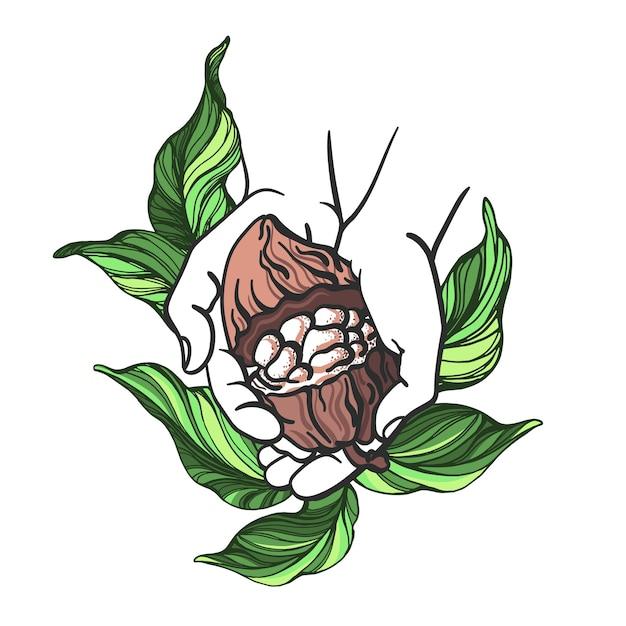 Feuilles De Haricot Fruit De Cacao Et Illustration De La Main Humaine Vecteur Premium