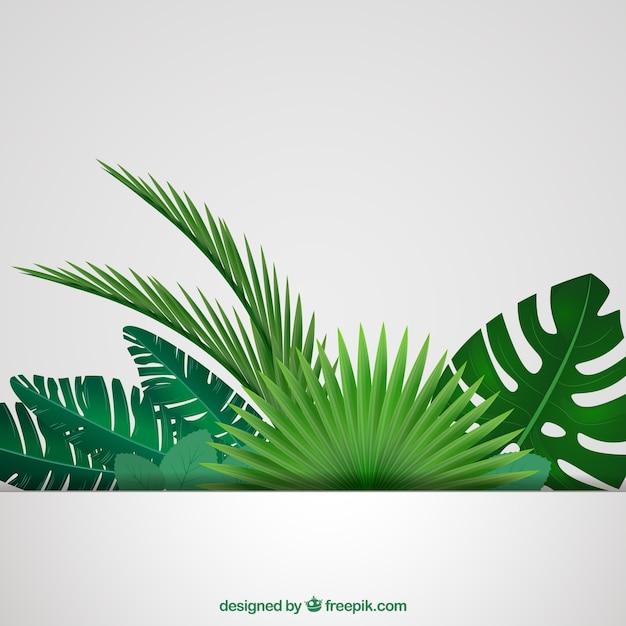 Feuilles Tropicales Fond Vecteur Premium