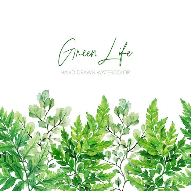 Feuilles Vertes Aquarelles, Bordure Transparente Des Fougères Vecteur Premium