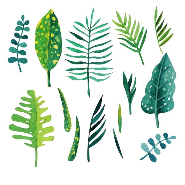 Les feuilles vertes colletion Vecteur gratuit