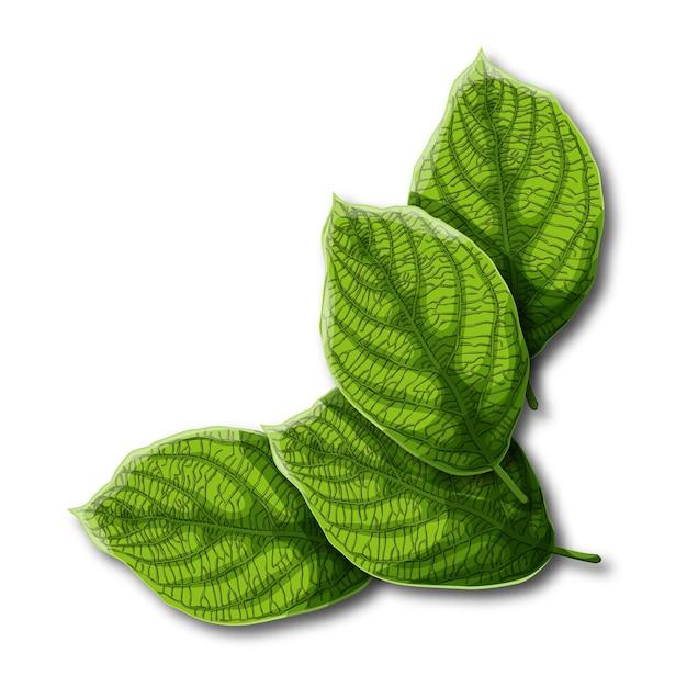 Feuilles vertes avec des veines isolés sur fond blanc. Vecteur Premium