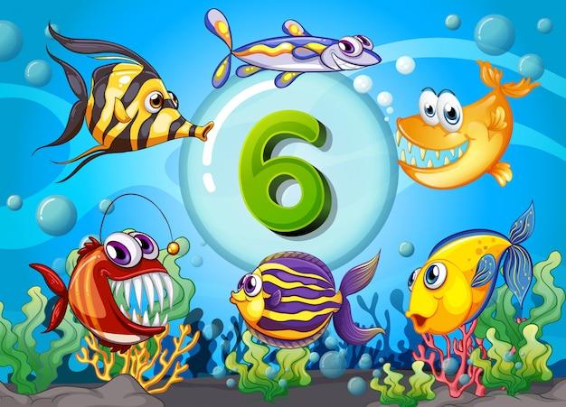 Flashcard numéro six avec 6 poissons sous l'eau Vecteur Premium