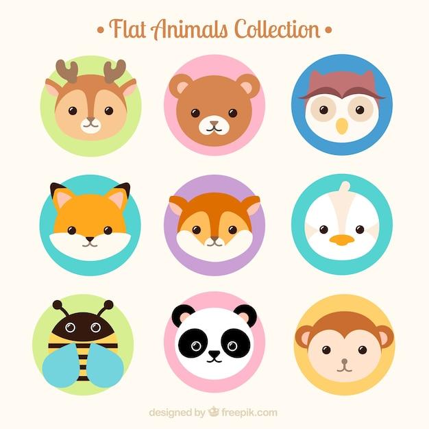 Flat belle collection animal avatar Vecteur gratuit