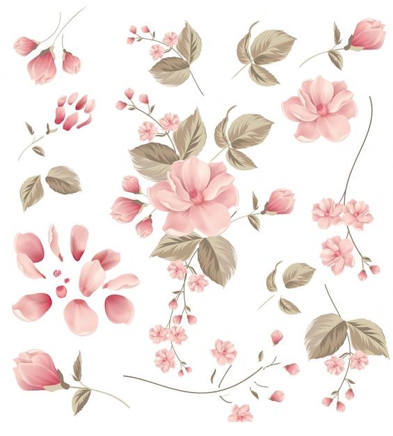 Fleur, cadre Vecteur Premium