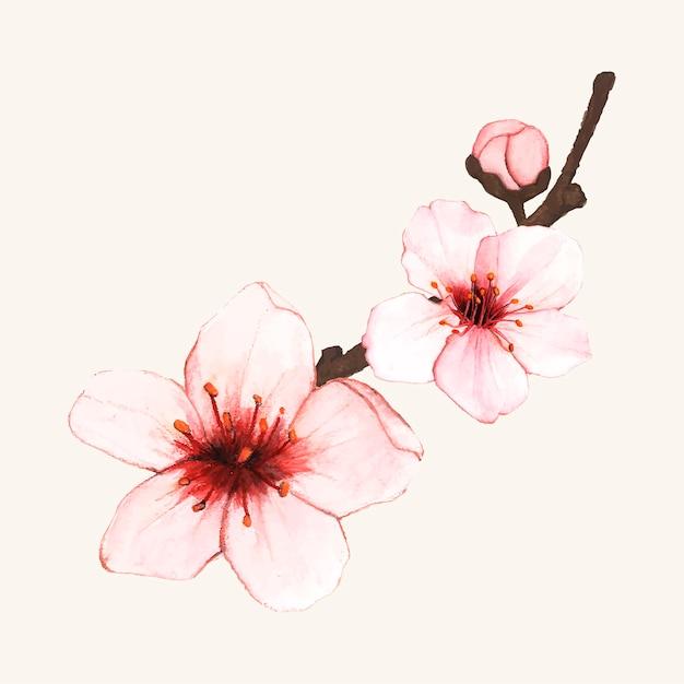 Fleur de cerisier dessiné main fleur isolée Vecteur gratuit