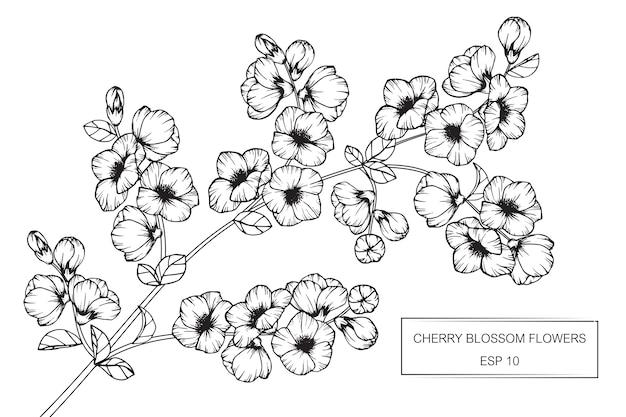 fleur de cerisier fleur dessin illustration  vecteur premium