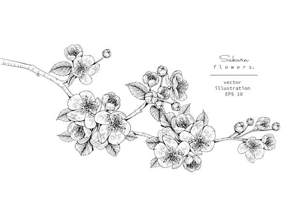Fleur De Cerisier Sakura Fleur Dessins Vecteur Premium