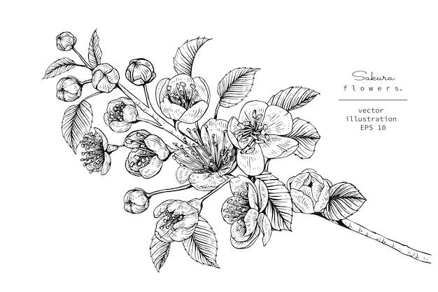 Fleur De Cerisier Sakura Fleur Dessins Telecharger Des Vecteurs