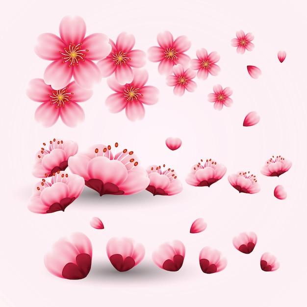 Fleur de cerisier Vecteur Premium