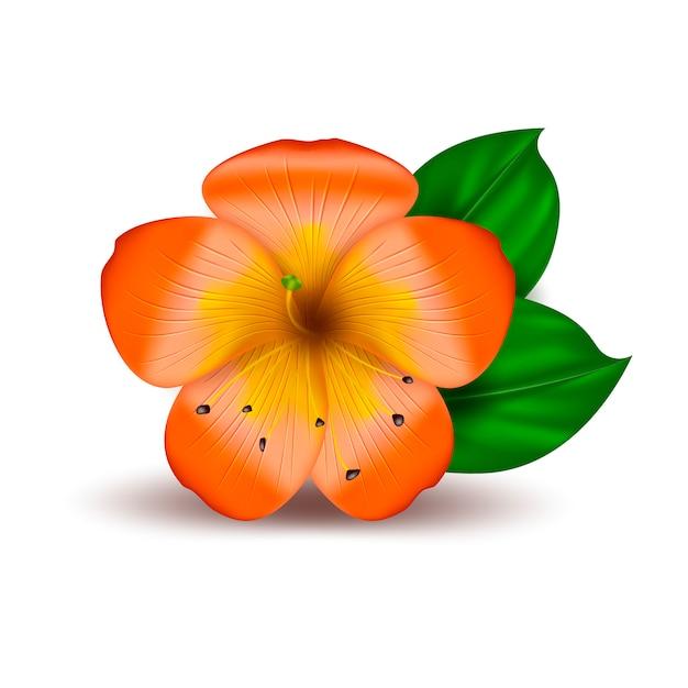 Fleur Hawaïenne Tropicale Réaliste De Vecteur   Vecteur ...
