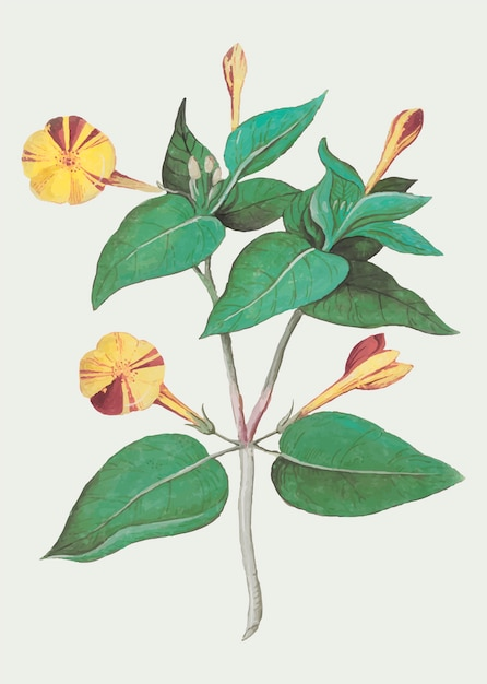 Fleur jaune vintage Vecteur gratuit