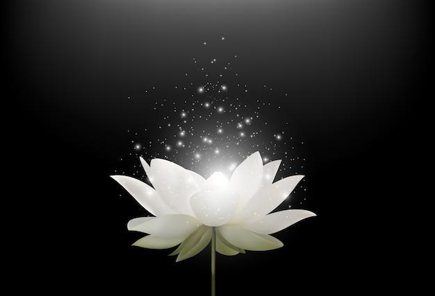 Fleur de lotus blanc magique sur fond noir Vecteur Premium