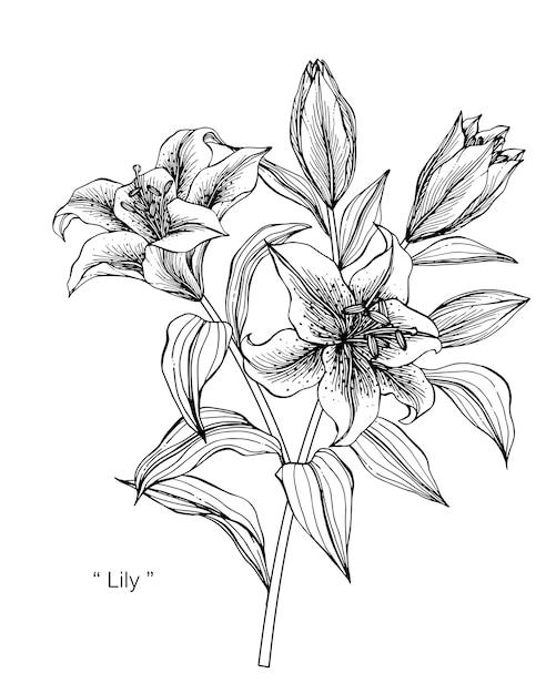 Fleur De Lys Dessin Illustration Telecharger Des Vecteurs Premium