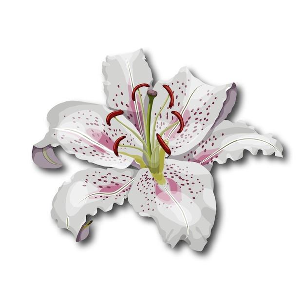 Fleur De Lys Vecteurs Et Photos Gratuites