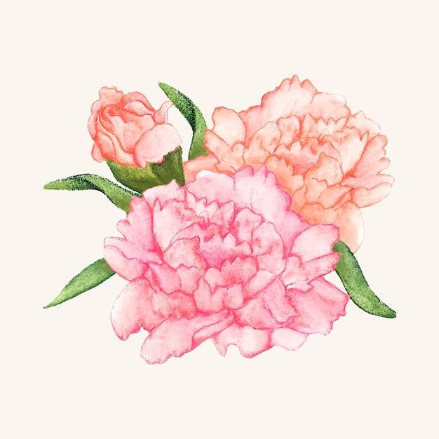 Fleur d'oeillet dessinés à la main isolé Vecteur gratuit