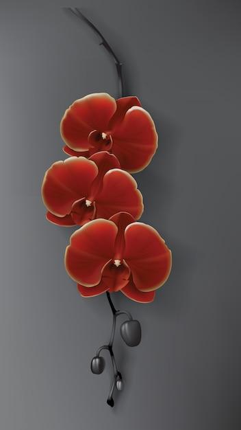 Fleur d'orchidée tropicale noire, rouge et or sur noir Vecteur gratuit
