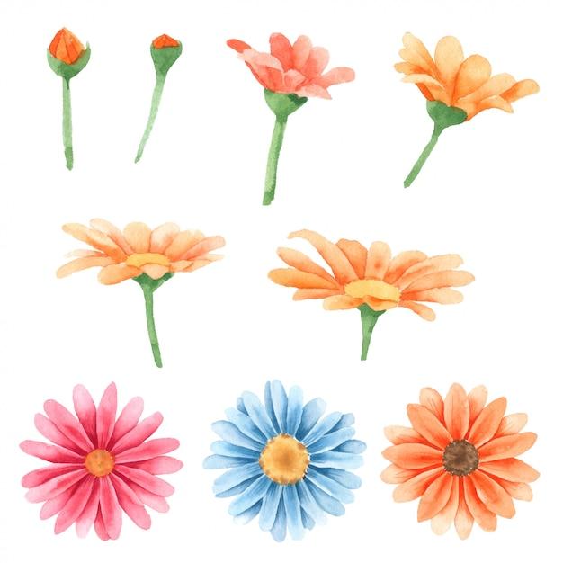 Fleur peinte à la main dans la collection d'aquarelles Vecteur Premium