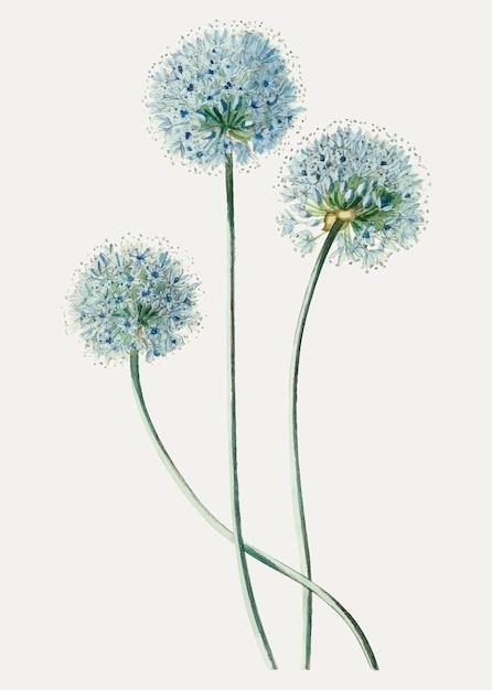 Fleur de pissenlit Vecteur gratuit