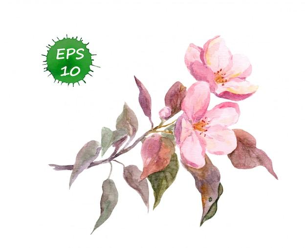 Fleur de pommier rose. Vecteur Premium