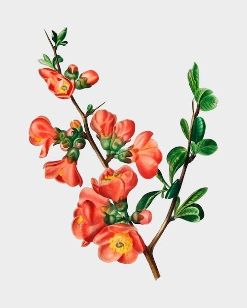 Fleur Vecteur gratuit