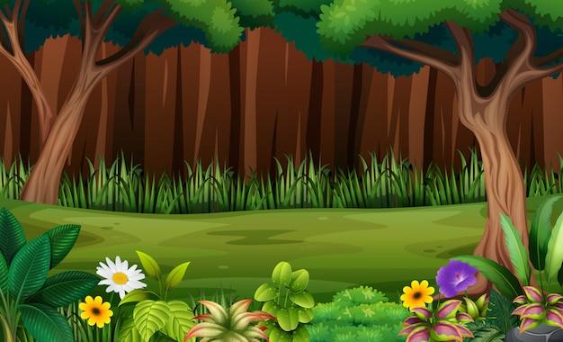 Fleurs et arbres dans la forêt Vecteur Premium