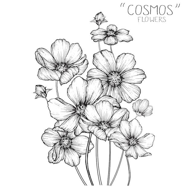 Fleurs cosmos et dessins de feuilles Vecteur Premium