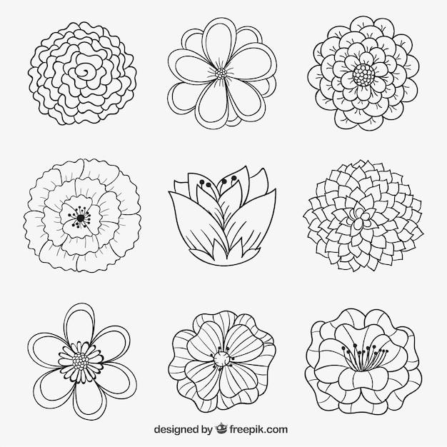 Dessiner Des Fleurs fleurs dans un style dessiné à la main   télécharger des vecteurs