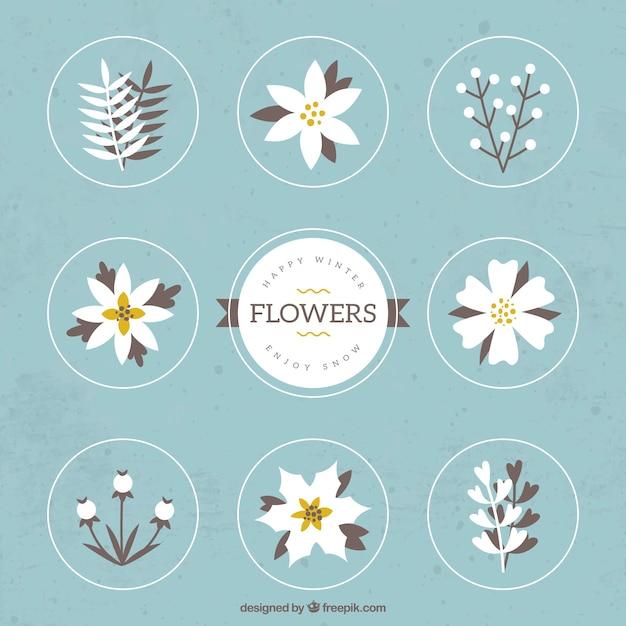 Fleurs et plantes pour l 39 hiver t l charger des vecteurs gratuitement - Fleurs de cimetiere pour l hiver ...