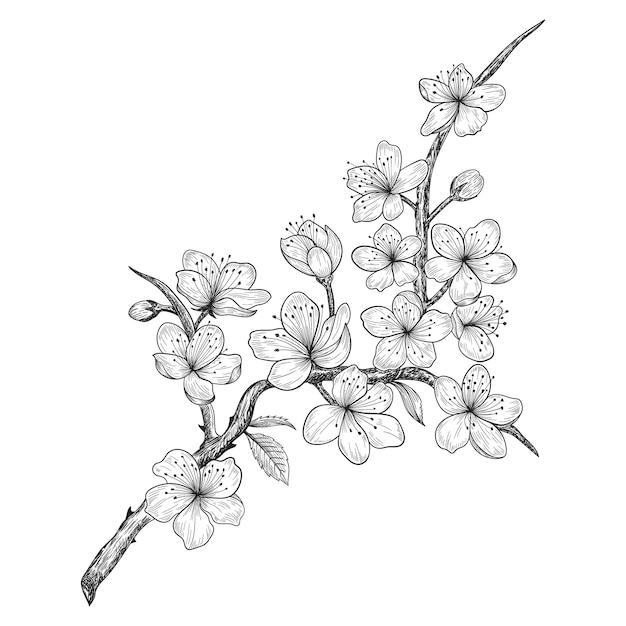 Fleurs Et Feuilles De Cerisier Dessines A La Main Dessin Illustration Vecteur Premium